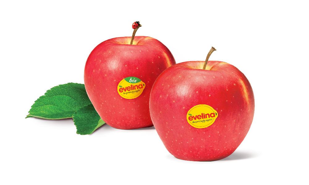 evelina apple lars